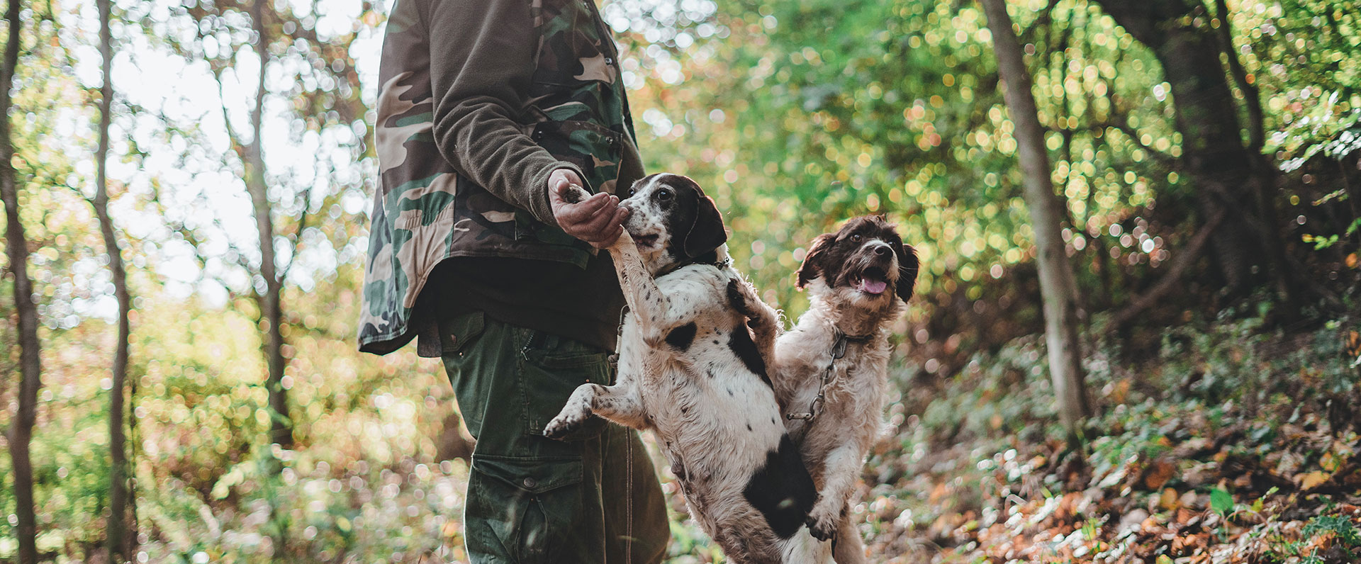 truffle hunt and walk in the wood